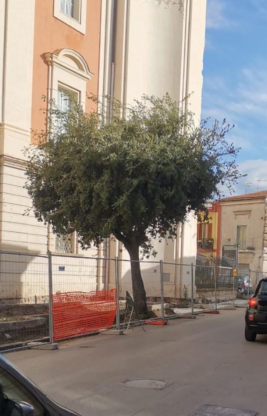 mondragone pino palazzo ducale